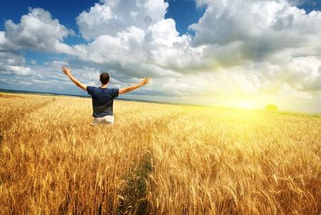 rise fall: Man in yellow wheat meadow. Conceptual design.