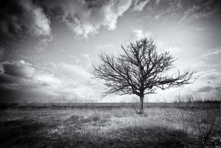 dry grass: Lonely dead tree. Art nature.  Stock Photo