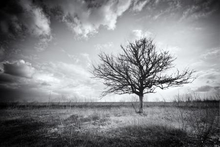 arbre mort: Solitaire arbre mort. La nature Art.