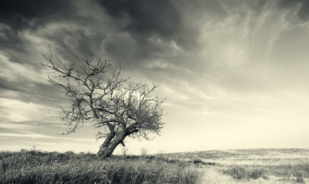Lonely tree on sundown. Nature composition. photo