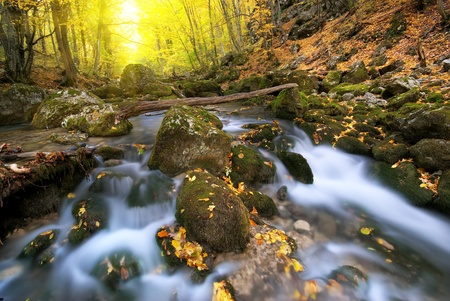 Autumn wood and river flow. Composition of nature.