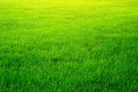 Green grass background texture. Element of design. Stock Photo