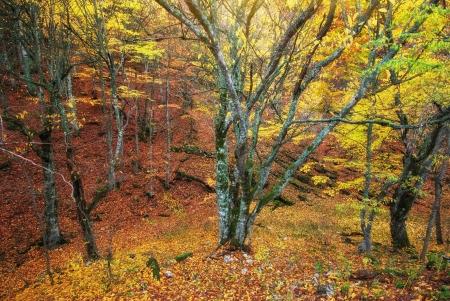 Autumn forest texture. Nature composition. photo