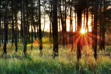 Sunlight in forest. Nature composition.