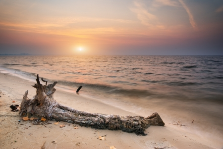 snag: Snag on sea. Composition of nature.