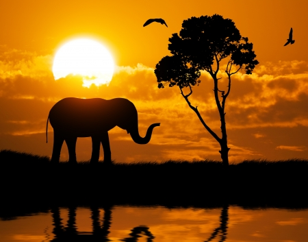 african tree: Silhouette of elephant. Element of design.