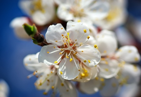 Spring flower. Composition of nature. Stock Photo - 14040366