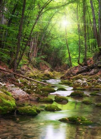 Rzeka głęboko w lesie górskim. Skład charakter.