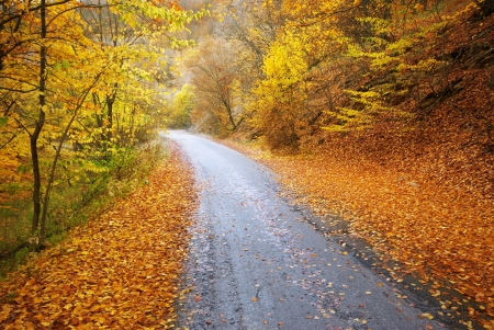autumn road: Road in autumn wood. Nature composition.  Stock Photo