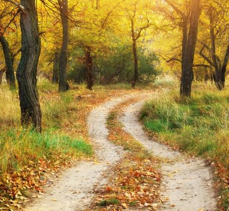 country park: Paisaje de oto�o. Composici�n de la naturaleza.