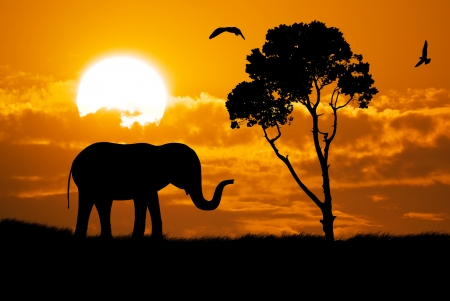 Silhouette of elephant  Element of design  photo