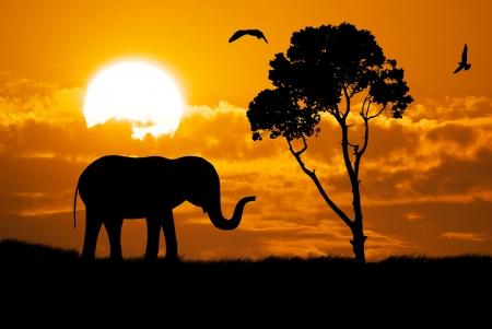 Silhouette of elephant  Element of design  photo