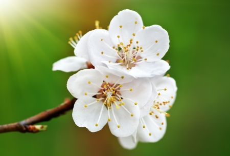 Spring flower  Composition of nature  photo