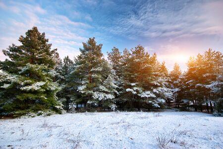 Winter landscape. Composition of nature. photo