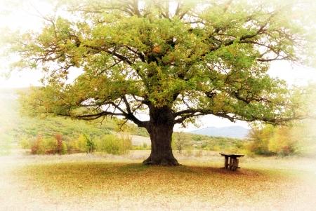 大きな木。自然の組成物。