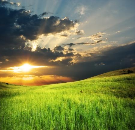山の緑の牧草地。自然の組成物。