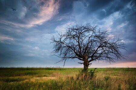 dead tree: Lonely dead tree. Art nature.  Stock Photo