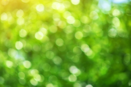 Bokeh background of foliage. Nature composition. Stock Photo