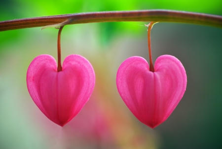 hanging flowers: Two heart flower. Concepual design.