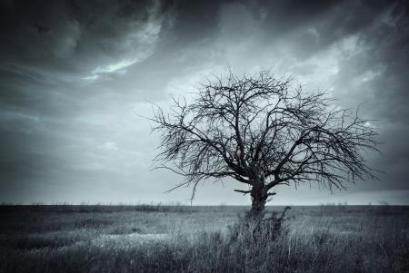 arboles secos: �rbol muerto solitario Foto de archivo