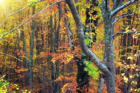autum: Autumn forest texture. Composition of nature. Stock Photo