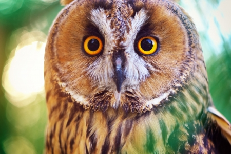 Owl portrait. Element of design photo