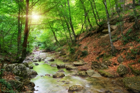 peaceful background: River deep in mountain forest. Nature composition. Stock Photo