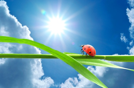 eternal: Ladybug looking on the sun. Conceptual design.