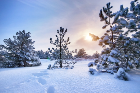 wintery day: Winter landscape. Composition of nature. Stock Photo