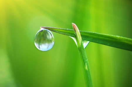 Macro of dew. Composition of nature.