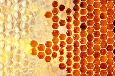 Honey in frame. Texture design. Standard-Bild