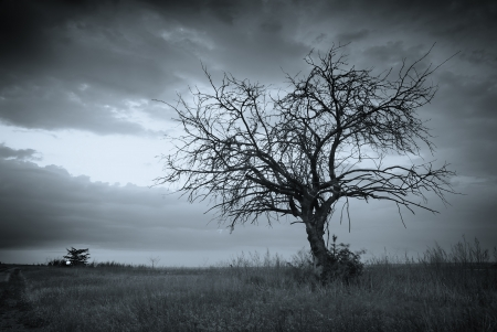 'dark ages': Lonely dead tree. Art nature.