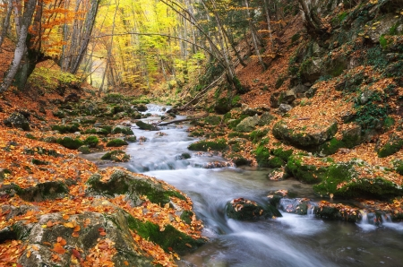 Autumn landscape. Composition of nature. River into canyon. Stock Photo - 25062541