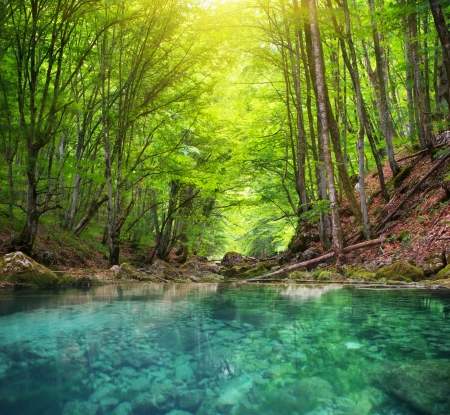 River deep in mountain forest. Nature composition. Standard-Bild