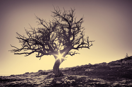 Lonely tree in mountain. Composition of nature. photo