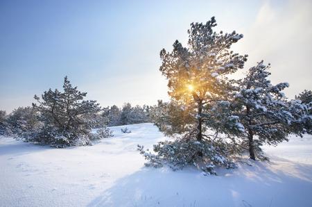 christmas landscape: Winter landscape  Composition of nature