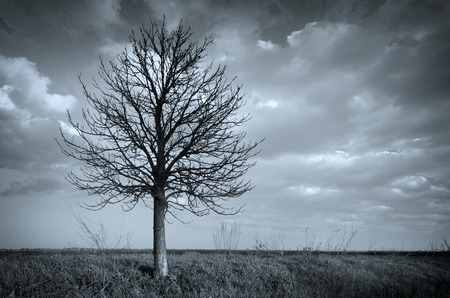 dead wood: Lonely tree. Composition of nature.