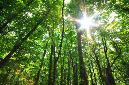 Green forest sunlight  Nature composition  Stock Photo