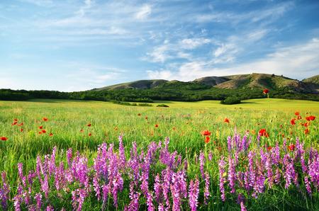 Spring meadow in meadow  Beautiful landscapes