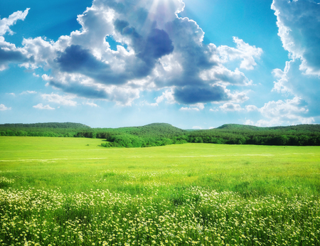 vista: Green meadow in mountain. Composition of nature.