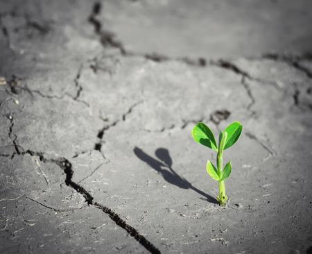 죽음의 땅에 작은 새싹. 개념적 장면.