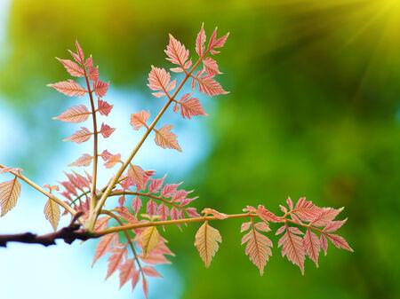 spring leaf: Spring leaf. Composition of nature.