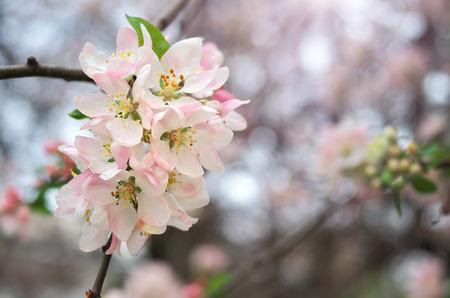 spring leaf: Spring leaf of apple tree. Nature composition.
