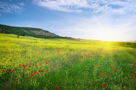 Prato primavera di fiori. Nature composition.