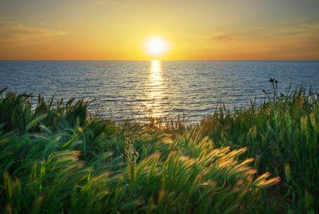 sea grass: Sundown composition. Sky, sea, and green grass.