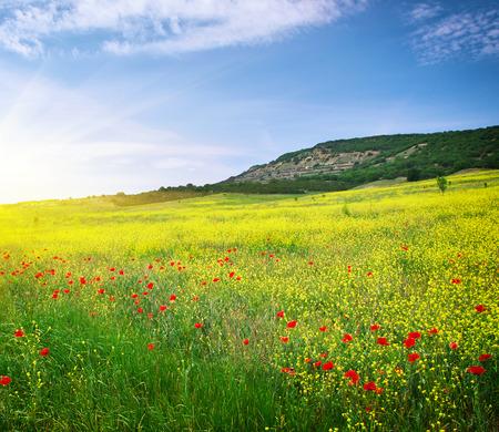 sommer: Frühlingswiese mit Blumen. Natur-Zusammensetzung. Lizenzfreie Bilder
