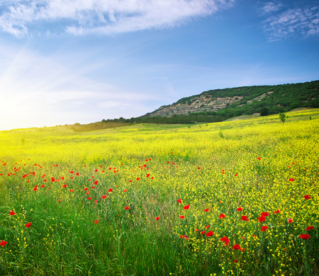 summer: Spring meadow of flowers. Nature composition.