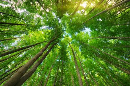 vida natural: En el bosque. Composición de la naturaleza.