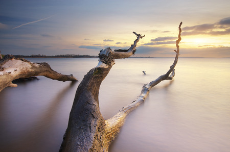 snag: Snag on the shore. Beautiful nature composition.