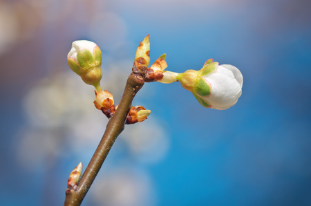 spring bud: Spring bud. Composition of nature.